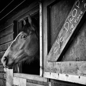 Racing-Stables-28_web